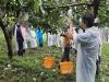 홍성군, 태풍 피해 농가에 일손 지원 나섰다!