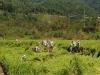 육군 36사단, 태풍 링링 피해농가 복구 지원