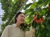 전주시, 체리 수확체험 즐기세요!
